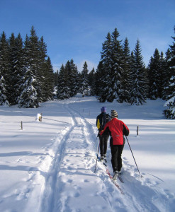 "Two cross-country skiers follow a trail through a spruce forest. The pair are using vehicle tracks as a ski trail. Otherwise, the lead skier would have to ""break trail."" Stockxchange.com photo."