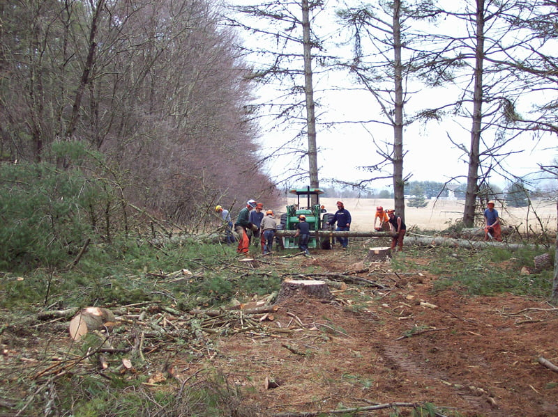 Forestry students at Pocahontas County High School cut down hundreds of white pine trees on National Radio Astronomy Observatory land. The timber was purchased by Judy's Fencecraft in Bartow. Work on the reforestation project is expected to continue through 2017. Photo courtesy of Mike Holstine