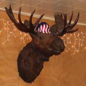 The interesting decor at Al's Upper Inn Club features a friendly moose.
