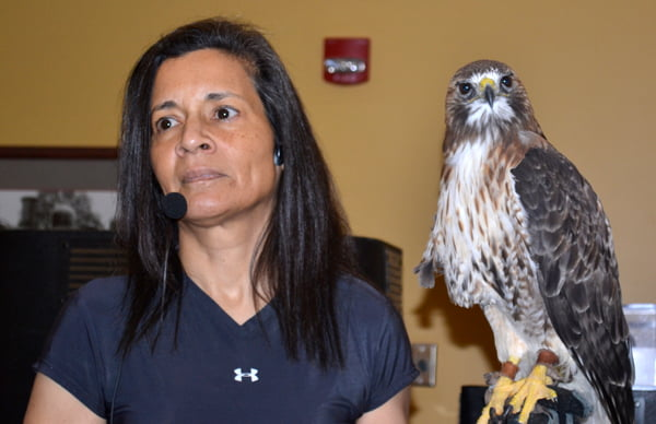 Flying Higher, LLC director Jo Santiago gives a presentation with red-tailed hawk Ty at the Homegrown Arts and Music Festival at Snowshoe Mountain Resort. Ty came to live with Santiago 18 years ago after he was injured by a motor vehicle. S. Stewart photo