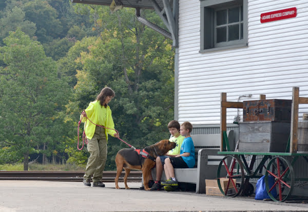 Appalachian Bloodhounds co-owner Sandy Weik trains bloodhound Sophie during Cass Harvest Days last weekend. Sophie was given an article of clothing from one of the boys on the bench and she followed his scent to find him waiting for her there. S. Stewart photo