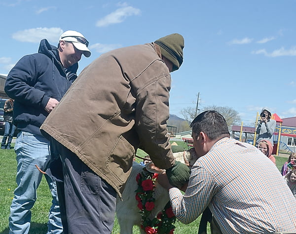 The big reward was when principal Joe Arbogast kept his promise and kissed a cow in front of the student body. Hillsboro farmers Tim VanReenen, left, and Tom VanReenen, supplied the calf – a three-week-old little lady sporting a wreath of red roses. S. Stewart photo