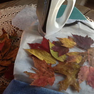 Assemble your supplies – leaves, waxed paper, iron and pressing cloth. L.D. Bennett photos