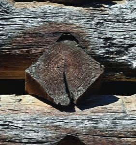 """diamond notching is rumored to be the earliest style in this area. This """"notch"""" was found in the John McNeel barn in Hillsboro. deGraauw says it is definately on the list for tree-ring dating.  Photos courtesy of centralapptim bers.weebly.com"""