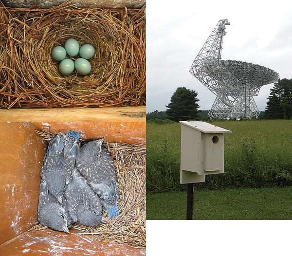 """EVERYSTRUCTUREHOLDSa story, and lots of information is gathered at the Green Bank Observatory. Above is one of 20 birdhouses placed on the observatory grounds last spring. Detailed records are kept for each """"home,"""" including how many birds hatched and thrived, and how many fell to predators. D. Curry photos"""