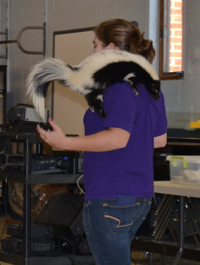 Barn Hill Preserve public speaker Sarah Boatner shows her friend, Flower, the white striped skunk, to students at Marlinton Elementary School Friday. S. Stewart photo